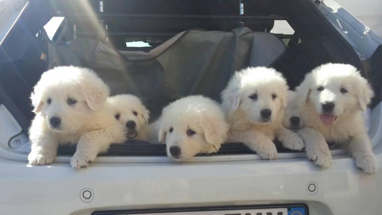 6 secondi dei nostri cuccioli