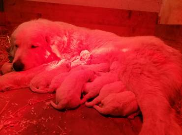 Auguroni a Nala e Giro. Nove bellissimi cuccioli