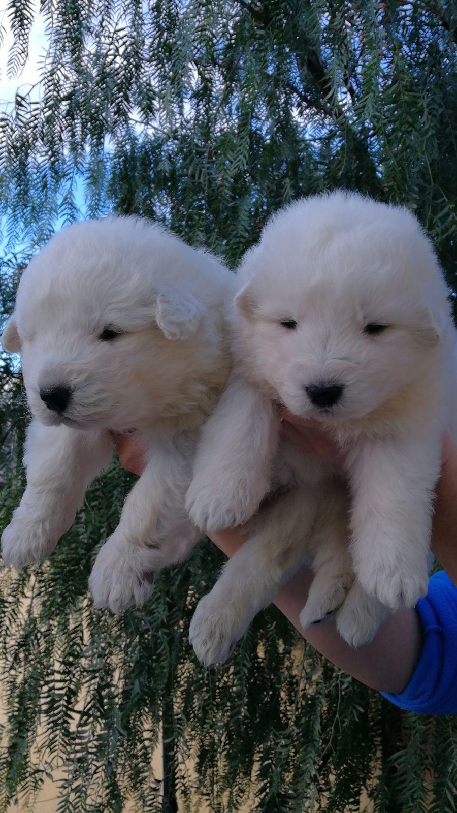 I cuccioli di Nala e Giro hanno compiuto 15 giorni!
