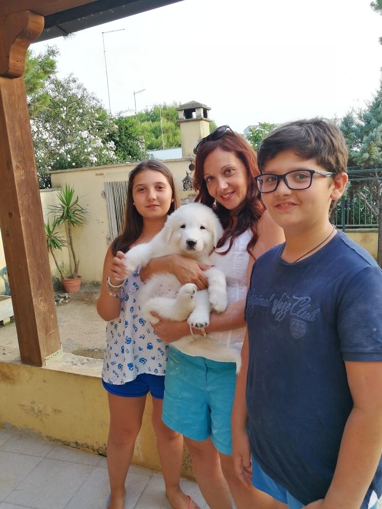 Come scegliere un bel cucciolo di pastore maremmano-abruzzese
