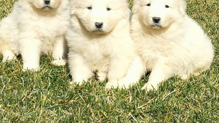 I nuovi cuccioli sono in attesa di un nuovo padrone